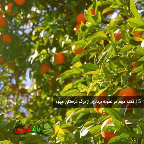 ۱۵ نکته مهم در نمونه برداری از برگ درختان میوه