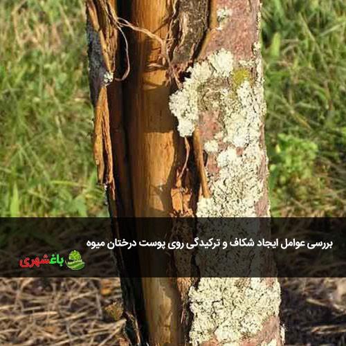بررسی عوامل ایجاد شکاف و ترکیدگی روی پوست درختان میوه