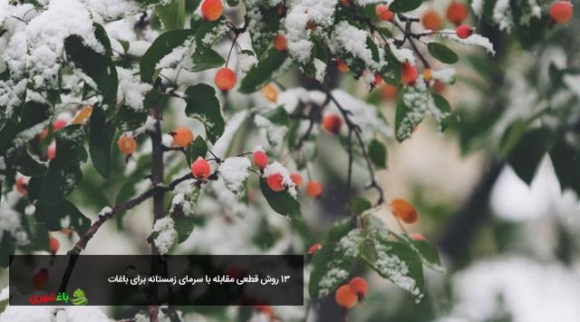 ۱۳ روش قطعی مقابله با سرمای زمستانه برای باغات